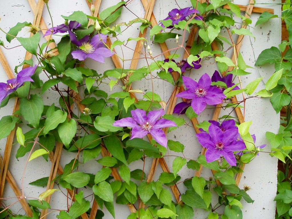 Adding trellis to your garden in Michigan